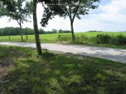 Boschweg met een van de zes wierden van Onderdendam